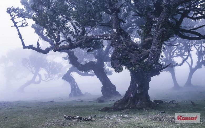 Artistici Natura 4 - Magnifico S.r.l. - Arredo d'interni